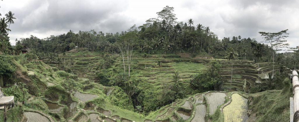 Bali rismarker